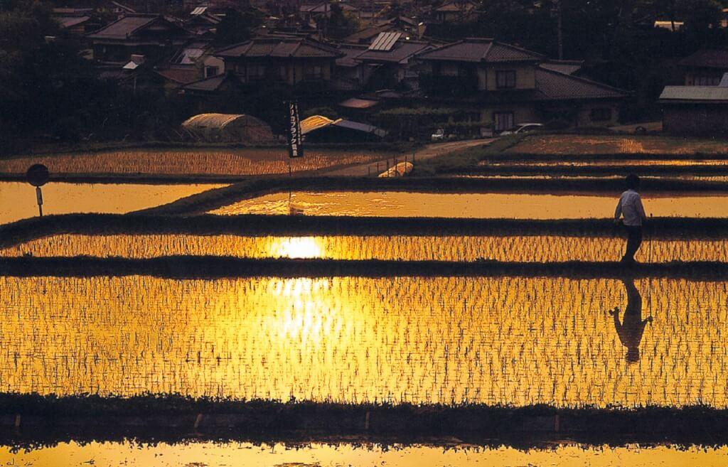 長野県喬木村のふるさと納税をまとめてみた