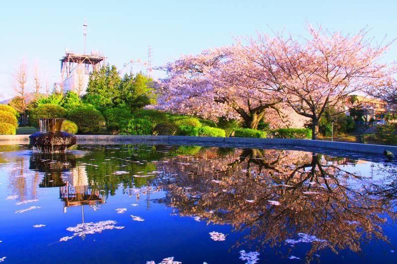 茨城県日立市のふるさと納税をまとめてみた