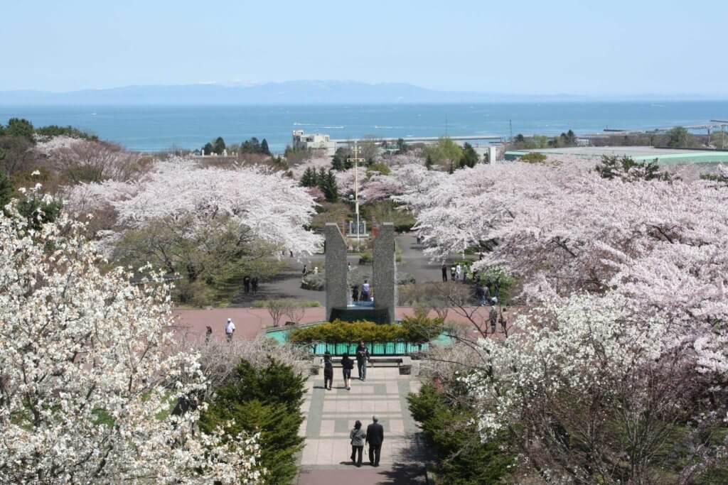 オニウシ公園の桜の写真