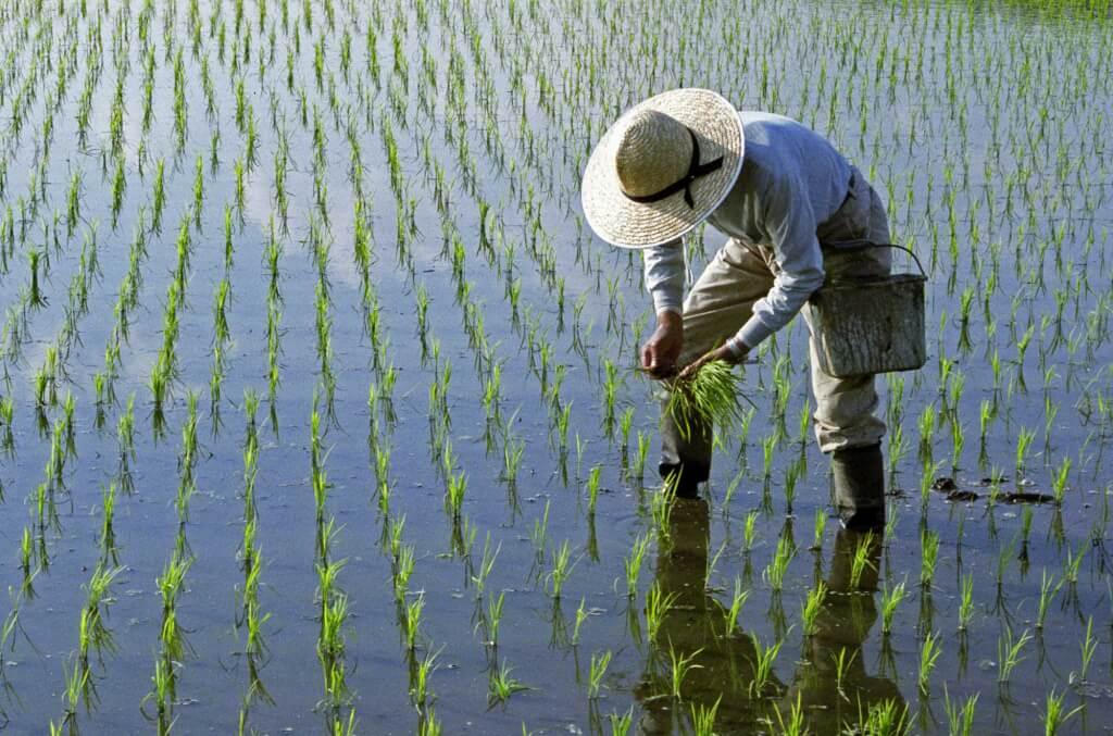お米の苗を植える農家さん